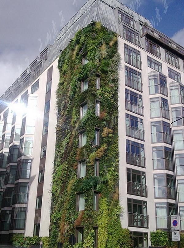 酒店植物墙,室内植物墙,植物墙设计