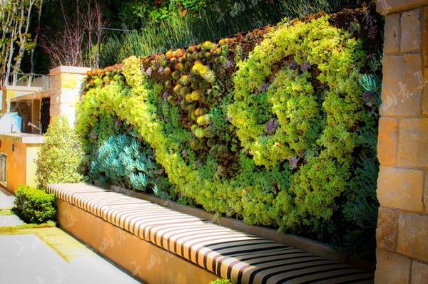 医院植物墙,室内植物墙,植物墙设计