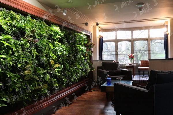 家庭植物墙,餐厅植物墙,客厅植物墙