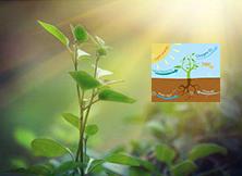 植物光谱补光,光合作用释放氧气