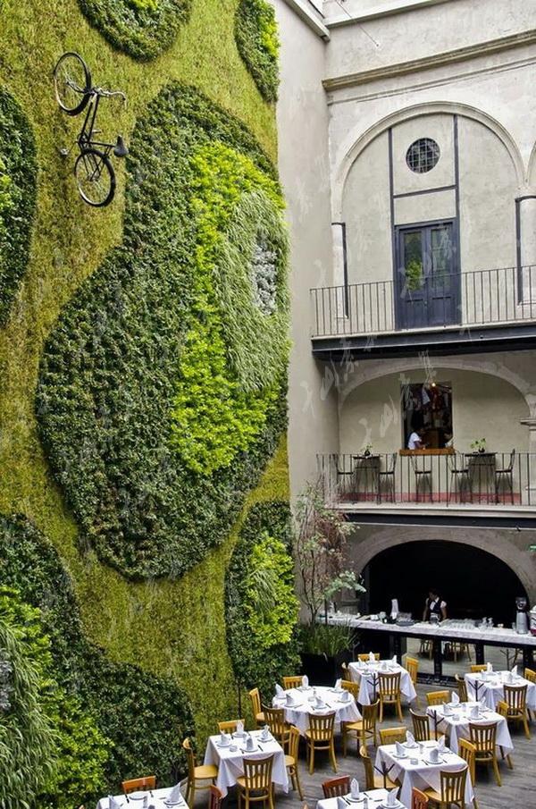 苔藓植物墙,植物墙作用